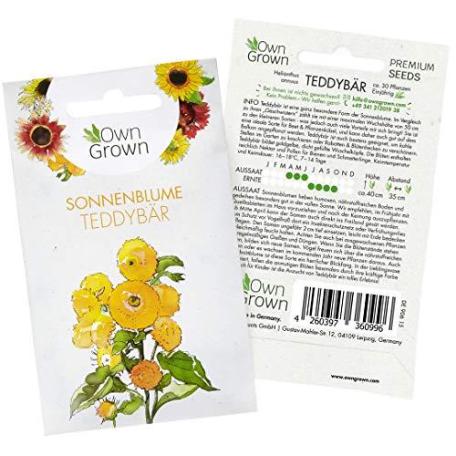 Sonnenblumen Samen Teddybär (Helianthus annuus): Premium Sonnenblumen Saatgut für Sonnenblume Mini Sorte - Sonnenblume Saat zur Anzucht von ca 30 Pflanzen, Insektenfreundliche Blumensamen von OwnGrown