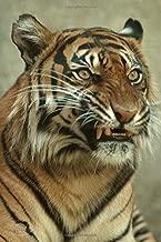 Best snarling tiger images Reviews
