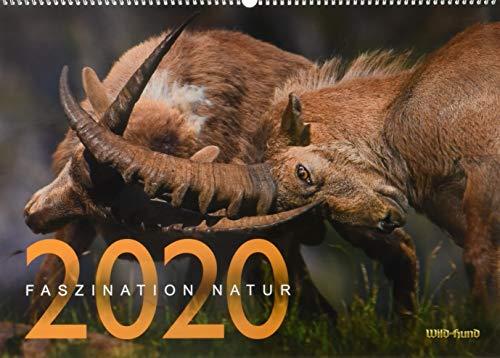 Faszination Natur Kalender 2020: WILD UND HUND