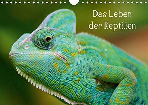 Das Leben der Reptilien (Wandkalender 2021 DIN A4 quer)