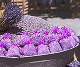 Enstpannung-Shop 10x Lavendelsäckchen - Insgesamt 100g Lavendel Duftsäckchen gegen Motten und für...