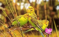TYXKHカウントクロスステッチキット 草の上の黄色のウグイス 40×50cmのDIYクロスステッチキットは、初心者向けの刺繡スターターキットのフルレンジを刻印しています。芸術11CT3ストランド室内装飾