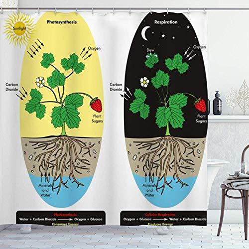 DYCBNESS Duschvorhang,Photosynthese Zellatmung Pflanzentau während des naturwissenschaftlichen Vergleichs Bildung,Langhaltig Hochwertig Bad Vorhang Wasserdichtes Design,mit Haken 180x180cm