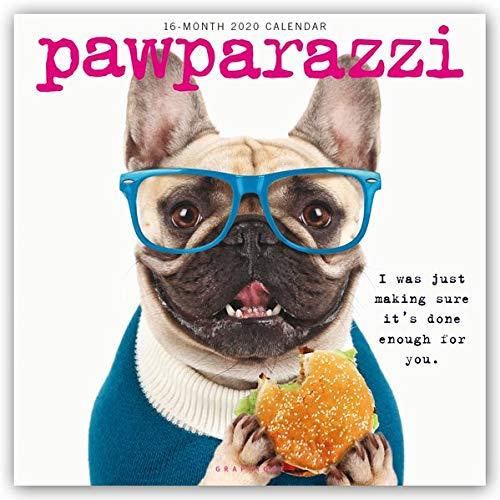 Graphique Pawparazzi Wall Calendar, 16-Month 2020 Wall Calendar with Cute Dog Photographs, 3 Languages & Major Holidays, 2020 Calendar, 12' x 12'