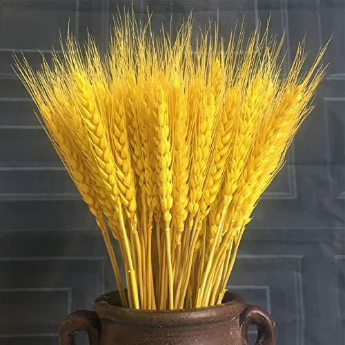 HHJS Secas Ramo de Flores Ramo de Trigo Trigo Seco Natural para Decoración de jarrón Boda hogar Oficina Cocina Fiestas o Regalo Espigas de Trigo Dorado