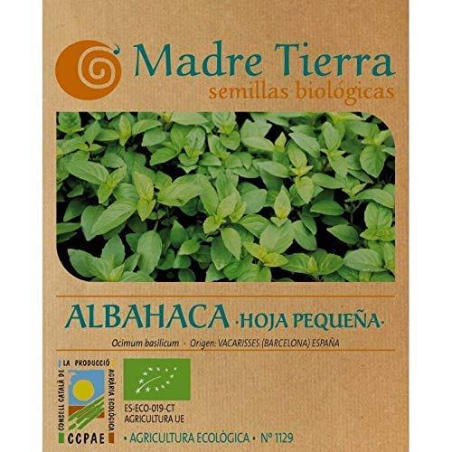 Madre Tierra - Semi di basilico biologico - Foglia piccola - (Ocimun Basilicum) Origin Vacarisses - Barcellona - Semi speciali - 1,5 grammi
