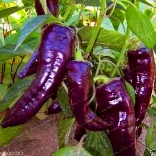 Shopvise de piment de semences de légumes 100 unités; couleur 8