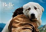 Belle et Sebastien, l'aventure continue