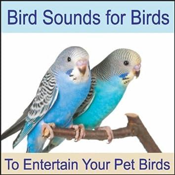 Bird Sounds for Birds: To Entertain Your Pet Bird, Parrots, Cockatiels, Cockatoo, Parakeets, Nature Sounds, Bird Talk