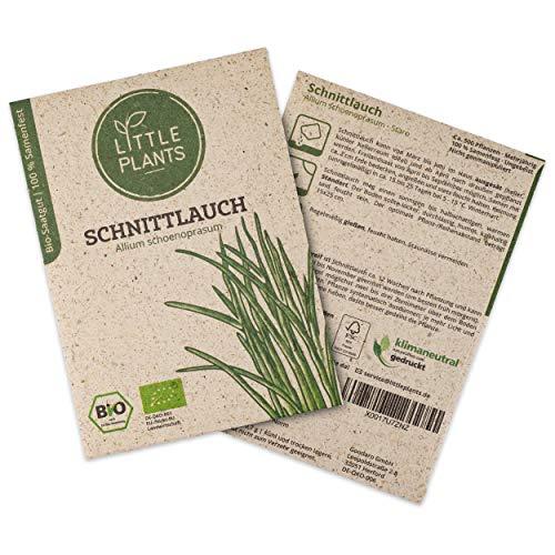 Little Plants BIO-Schnittlauchsamen (Allium schoenoprasum) Staro | BIO-Kräutersamen | Nachhaltige Verpackung aus Graspapier | Kräuter-Samen | BIO-Saatgut für ca. 500 Schnittlauch-Pflanzen