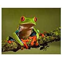 5D画像クロスステッチダイヤモンドアートDIYダイヤモンド絵画カエル動物柄ビーズ刺繡キット石50x40cm