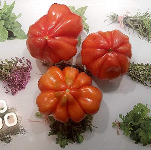Ochsenherz-Tomate - Tomate Cuor di Bue - 60 Samen