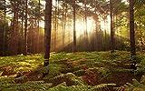 Non Branded Broxburn Bosque Bosque Luz del Sol Árboles Plantas Juego De Rompecabezas para Adultos De 1000 Piezas