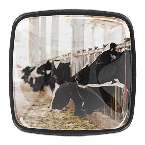 4 pomelli in vetro di cristallo per armadietti, maniglie per cassetti, ante con viti, teste di mucche bianche e nere