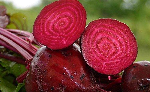 100 + DETROIT BETTERAVE jus mis au point des semences non-ogm organique Choux Jardin/Conteneurs