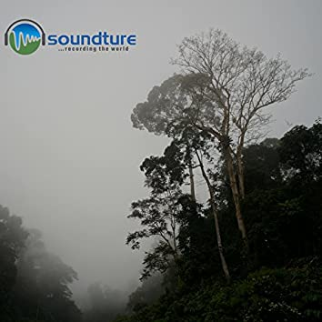 Relaxed Meditation and Asmr W Nature Sounds at Danum Valley 2