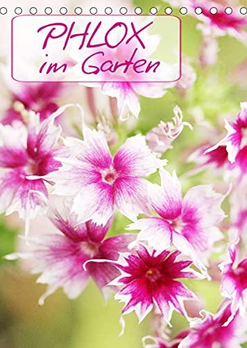 Phlox im Garten (Tischkalender 2022 DIN...