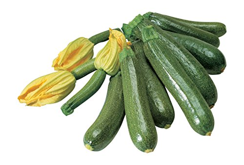 Burpee Fordhook Zucchini Summer Squash Seeds 50 seeds