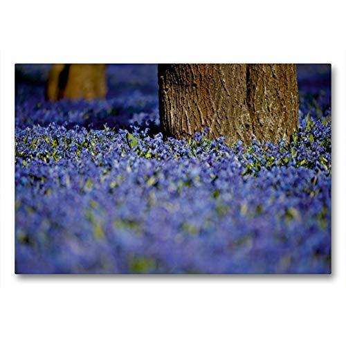CALVENDO Premium Textil-Leinwand 90 x 60 cm Quer-Format Sibirischer Blaustern, Leinwanddruck von Bild-erzaehler
