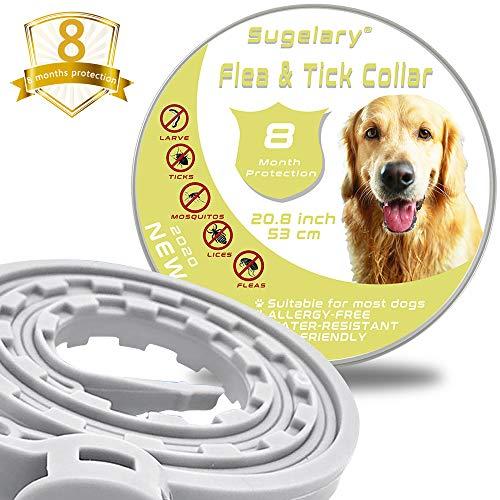 Collare Antipulci Cane Impermeabile, Collari Antiparassitario per Cani Aaturale e Sicura Regolabile, 8 Mesi di Protezione per Contro Parassiti e Insetti Protezione Stagione Completa (53 cm) (1 pezzi)