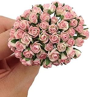 Best miniature pink roses Reviews
