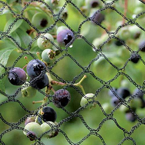 Black Orchd Filet de Jardin Anti-Oiseaux en Maille de qualité exceptionnelle, Solide et Doux pour Arbres fruitiers, légumes et Plantes – Prévention sans Danger 12m x 20m Vert foncé