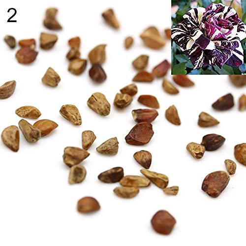 yanbirdfx Blumen Samen für Garten und...