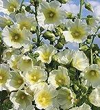Alcea Ficifolia Hybrid Halo White 10 S'eeds