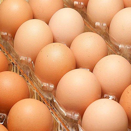 有精卵 80個箱詰め (北海道 卵ラン農場ムラタ) 健康有精卵 産地直送 ふるさと21
