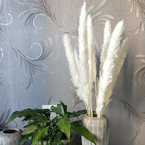 Tongxu 30 Pcs Naturel Fleurs séchées phragmites communis Naturel Séchage Pampa Herbe Canne Maison de Mariage Bouquet de Fleurs décoration Blanc (40cm)