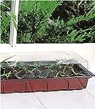 Invernadero para ventana (40 x 19 x 12 cm, 3 unidades)