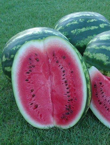 Wassermelone Crimson Sweet - 50 Samen