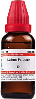 Willmar Schwabe Homeopathy Ledum Palustre Mother Tincture Q (30 ML) by Qualityexport