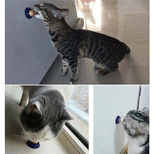 Crazystore Gesunde Katzensnacks Katzenminze Zuckersüßigkeiten lecken Feste Nahrung Energie Ball Haustier Snacks