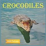 Crocodiles Calendar 2022: Official crocodiles 2022 Calendar (12 Months), animals Calendar 2022