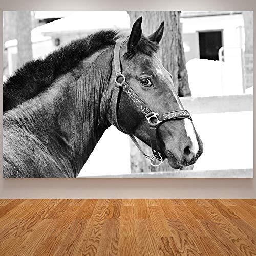 Bytfaa Carteles e Impresiones de Caballos, Arte de Pared en Blanco y Negro, decoración Minimalista Moderna para Sala de Estar, Cuadros de Gatos 50x70cm