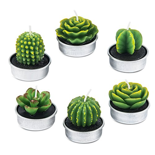 AMASKY Handmade Delicate Succulent Cactus Candles for Birthday Party Wedding Spa Home Decoration (6 Packs)