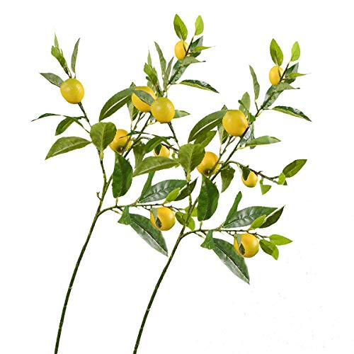 Lemon Branches