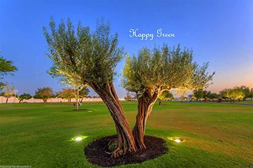 Portal Cool Olive Tree - Olea Europea - 25 graines - Excellent pour Bonsai