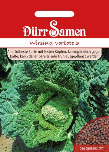 Kohlsamen - Wirsing Vorbote 3 von Dürr-Samen
