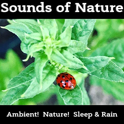 Ambient!, Nature! & Sleep & Rain