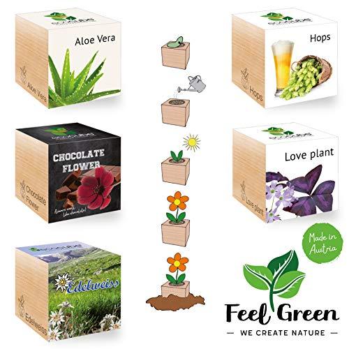 Feel Green Ecocube speciale 5-delige set mix assortimentverpakking - Bespaar tot 35% - zelf telen set in een houten kubus - Made in Austria - origineel, duurzaam & opvallend cadeau