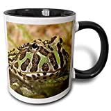 N\A Pacman Frog, South American Horned frog-NA02 AJE0359-Adam Jones Two Tone Mug, 11 oz, Nero/Bianco