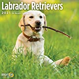 Bright Day 2021 Wandkalender mit Labrador Retrievers, 30,5 x 30,5 cm, süße Hundewelpen