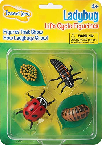 Insect Lore Ladybug Life Cycle - 4 PC Insect Figure Shows Life Of Lady Bug