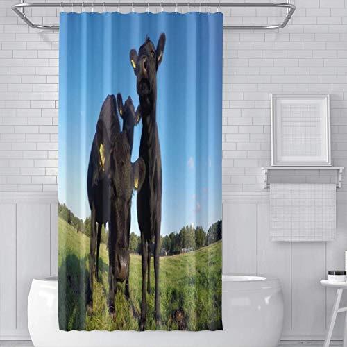 Felsiago – Cortina de ducha con ganchos Sunny Blue Sky Friendly Young...