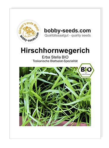 Hirschhornwegerich BIO-Salatsamen von Bobby-Seeds, Portion