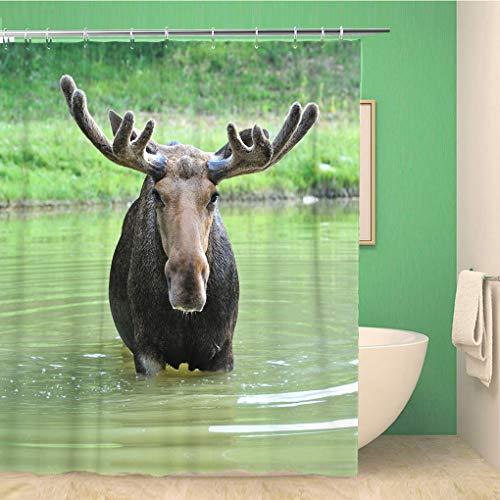 Awowee Decor Duschvorhang, rote Tier-Elch in ihrem natürlichen Habitat Elch Themes 180 x 180 cm, Polyester Stoff wasserdicht Badvorhänge Set mit Haken für Badezimmer