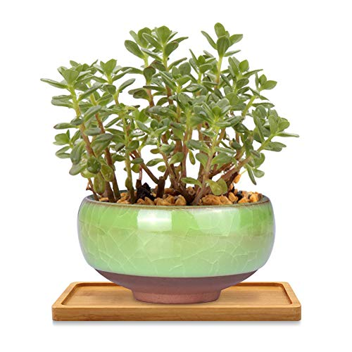 Platillo para plantas, mini bandeja rectangular de bambú, plato de drenaje para macetas, bandeja de...