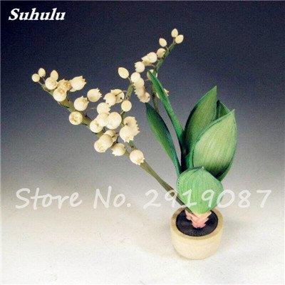 50 Pcs Campanula Graines rares Fleur Plante en pot Couleurs mélangées 95% Taux de bourgeonnement vivaces Plantes Bonsai Maison et Jardin 4